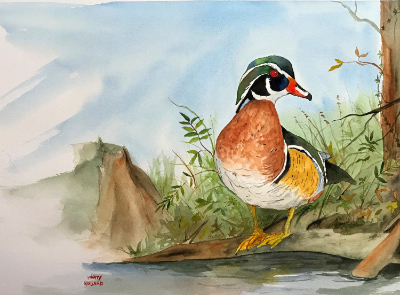 'Wood Duck' watercolor by Marty Holland
