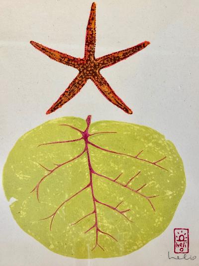 "Dawn Wilkins ""Spiny Sea Star & Sea Grape"" 8x10 mixed media $275"