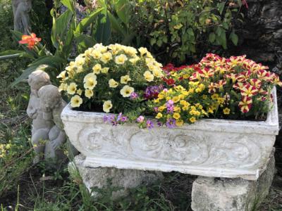 bursting flower bed