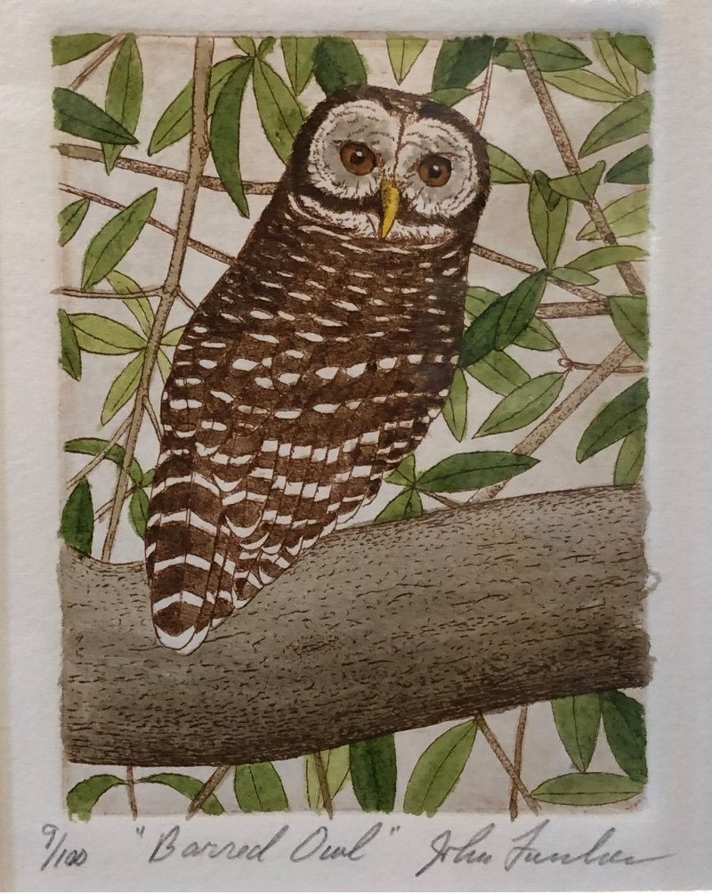 "John Furches ""Barred Owl"" 10x9 framed $200"