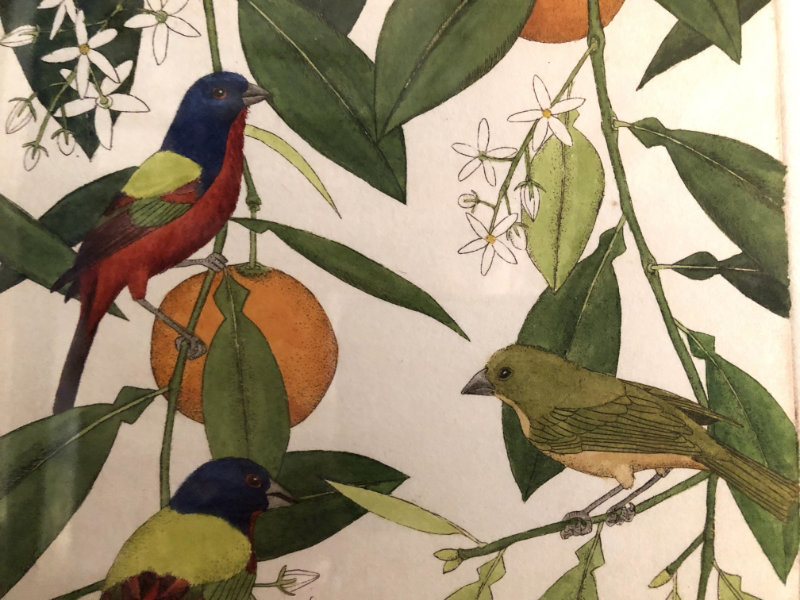 """John Furches """"Painted Buntings"""" detail 17x14 framed $210"""