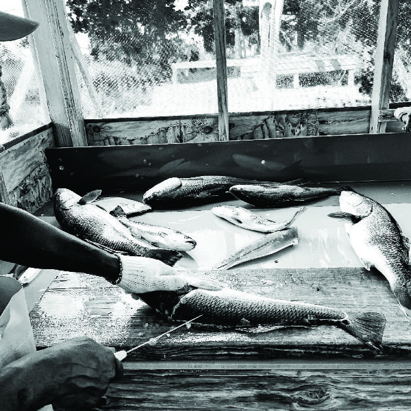 Larry McIntosh Redfish on the Table 24x28 framed $435